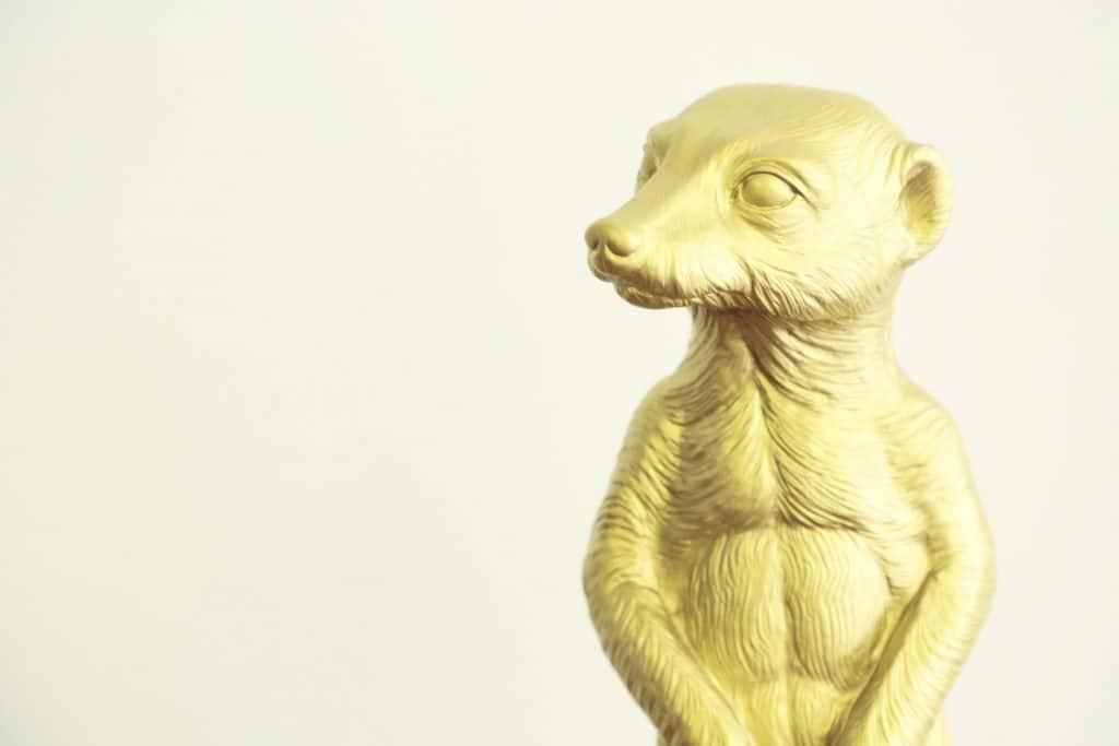 suricats-mascotte